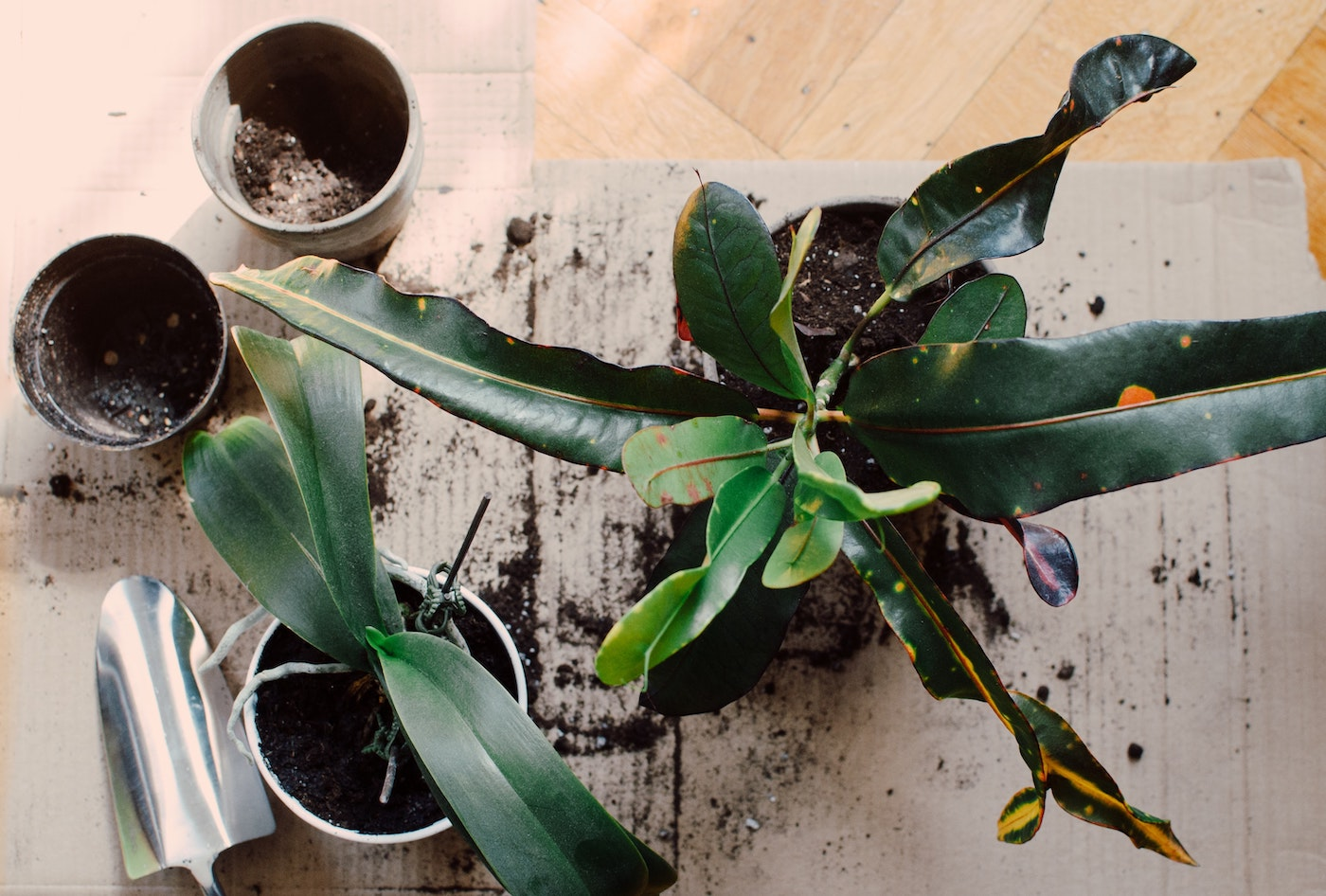Use your houseplants as decor