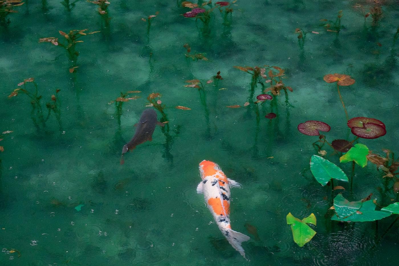 Adventurous Pond