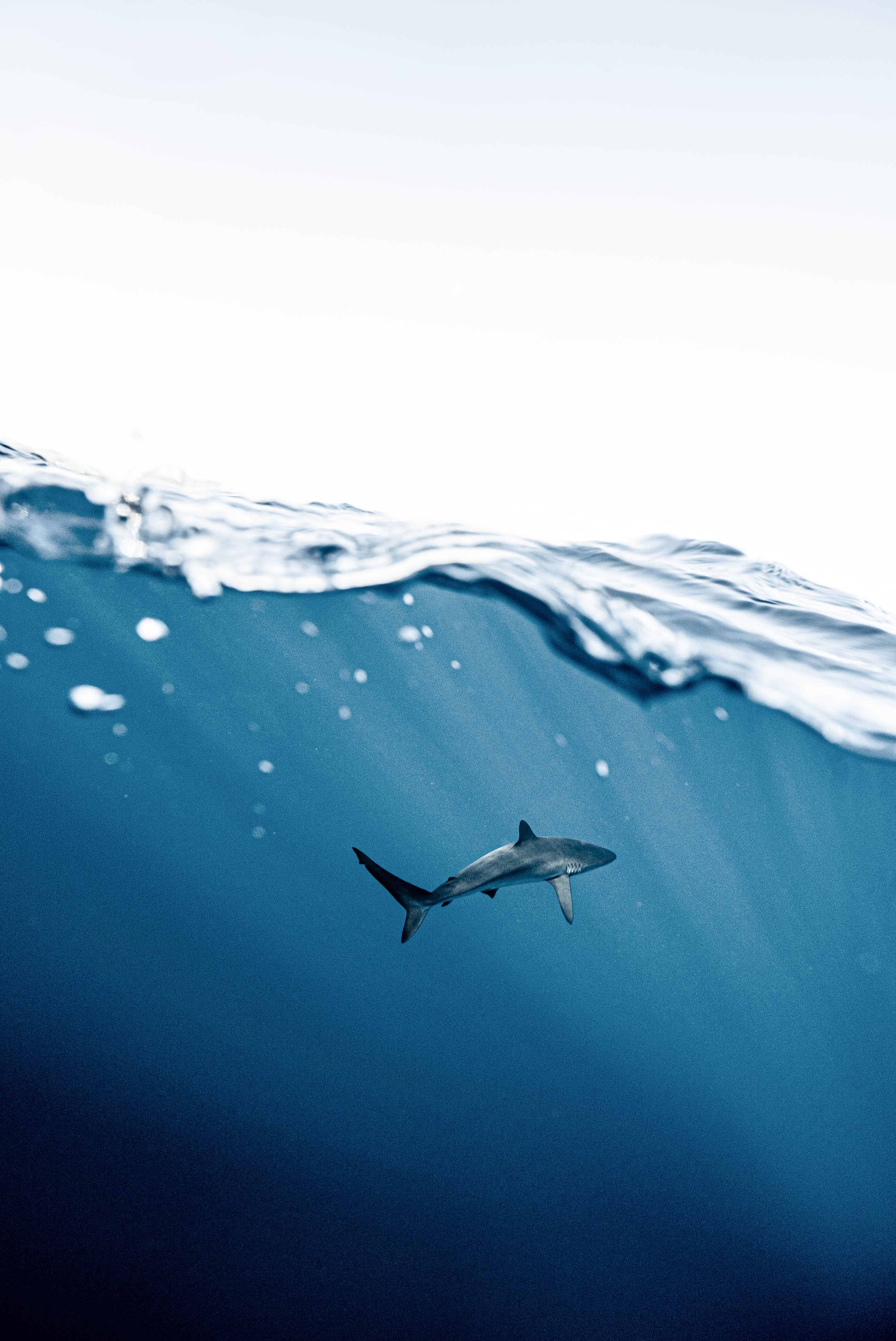 Are Shark Attacks Linked To Climate Change